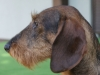 psy-25-03-2012-022