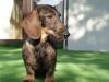 psy-16-03-2012-529